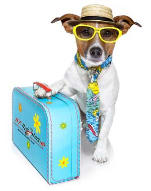 tourist dog with suitcase and sunglasses